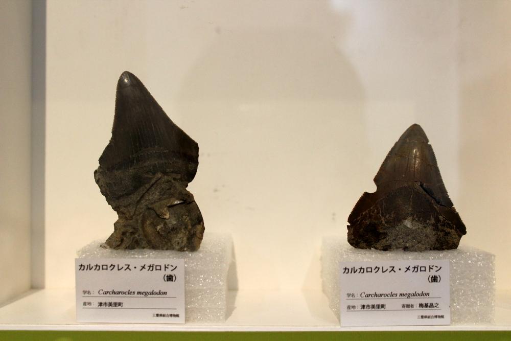 http://pangea-note.com/museum/blogimg/1-IMG_1880.JPG