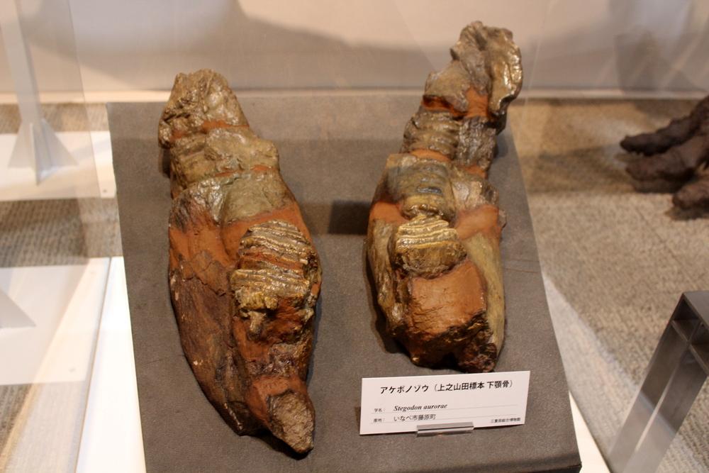 http://pangea-note.com/museum/blogimg/1-IMG_1884.JPG