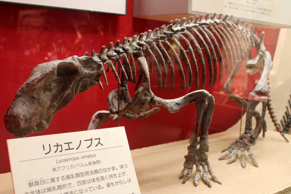 http://pangea-note.com/museum/blogimg/1-IMG_2069.JPG