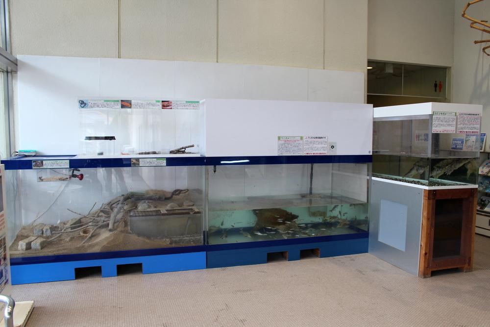 http://pangea-note.com/museum/blogimg/1-IMG_3753.JPG