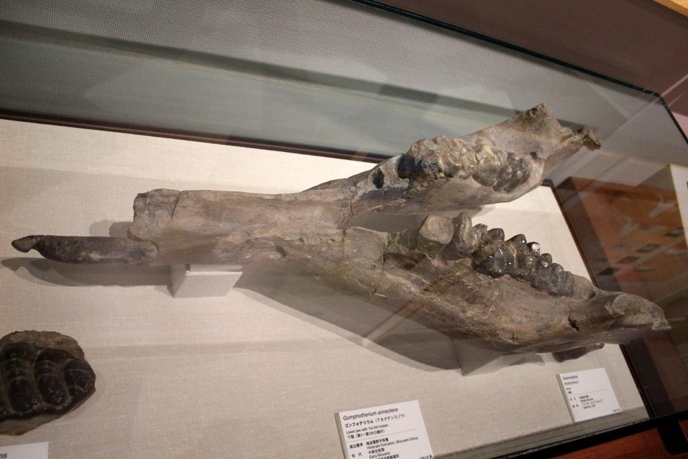 http://pangea-note.com/museum/blogimg/1-IMG_3800.JPG
