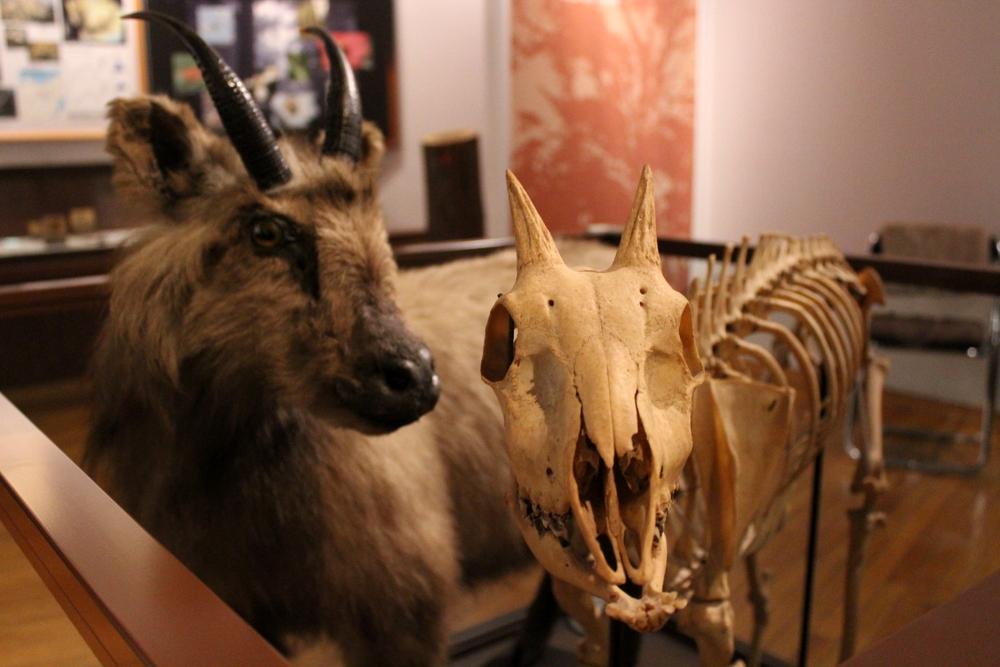 http://pangea-note.com/museum/blogimg/1-IMG_3811.JPG