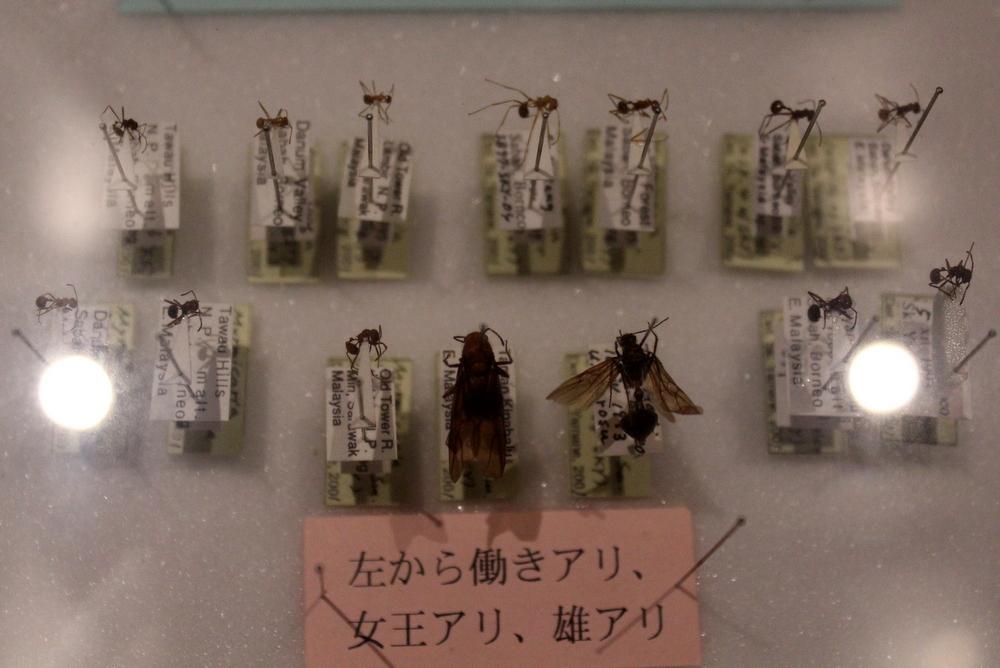 http://pangea-note.com/museum/blogimg/1-IMG_3820.JPG
