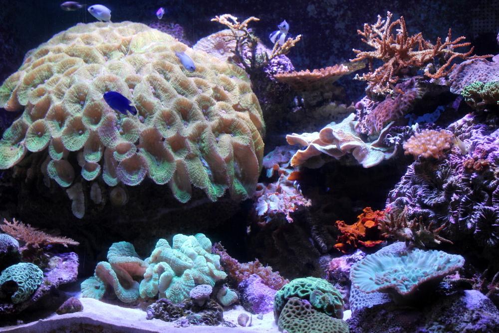 http://pangea-note.com/museum/blogimg/1-IMG_3824.JPG