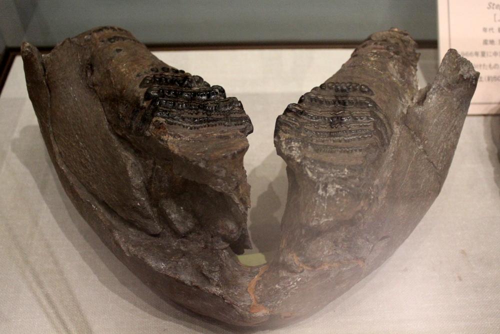 http://pangea-note.com/museum/blogimg/1-IMG_3838.JPG