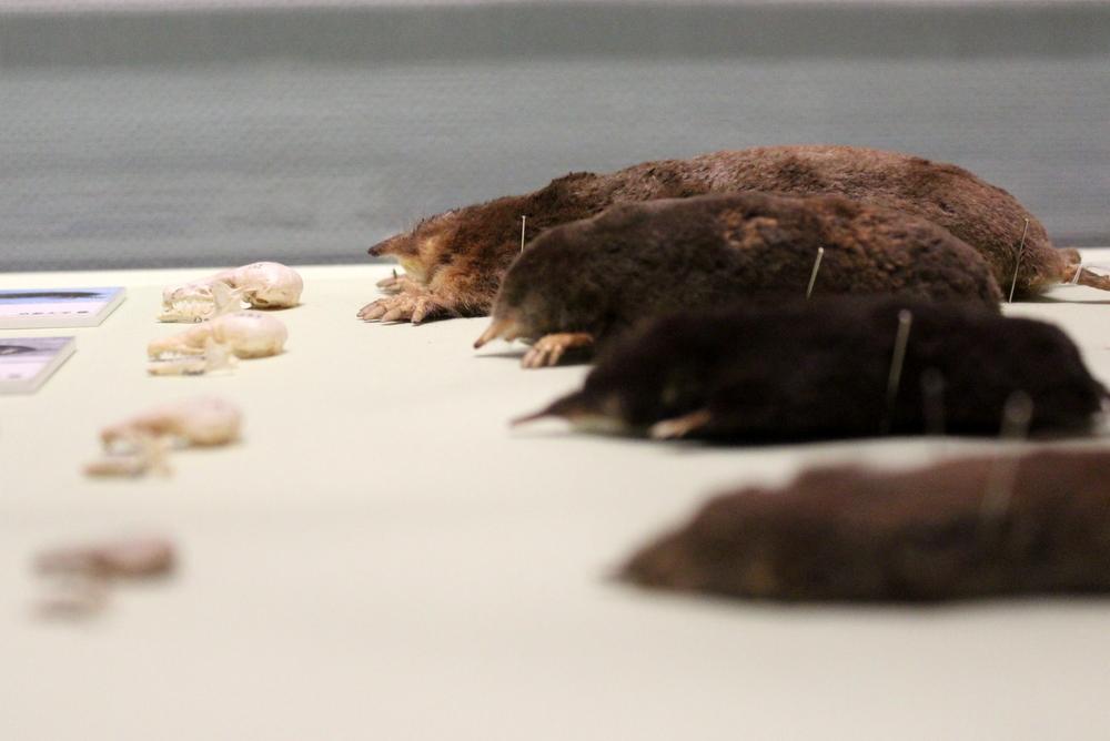 http://pangea-note.com/museum/blogimg/1-IMG_3854.JPG