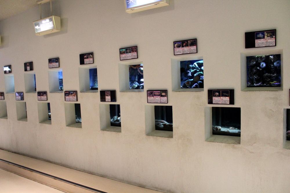 http://pangea-note.com/museum/blogimg/1-IMG_3916.JPG