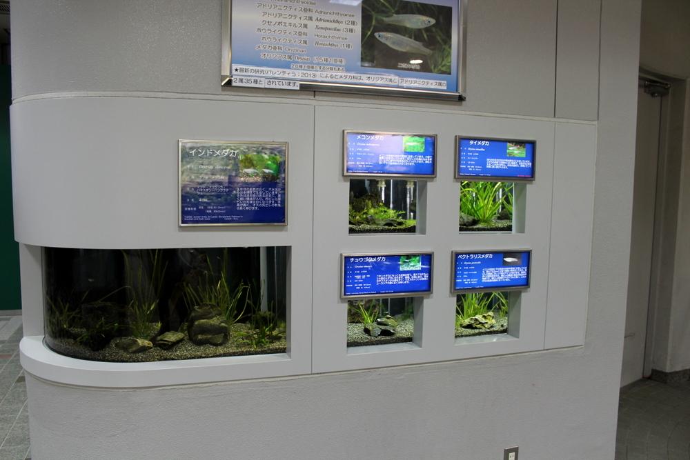http://pangea-note.com/museum/blogimg/1-IMG_4116.JPG