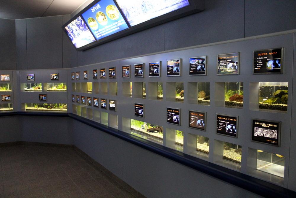 http://pangea-note.com/museum/blogimg/1-IMG_4122.JPG