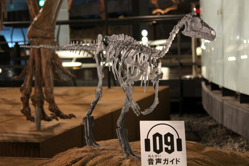 http://pangea-note.com/museum/blogimg/1-IMG_4192.JPG