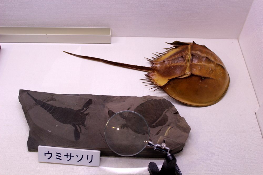 http://pangea-note.com/museum/blogimg/1-IMG_4223.JPG