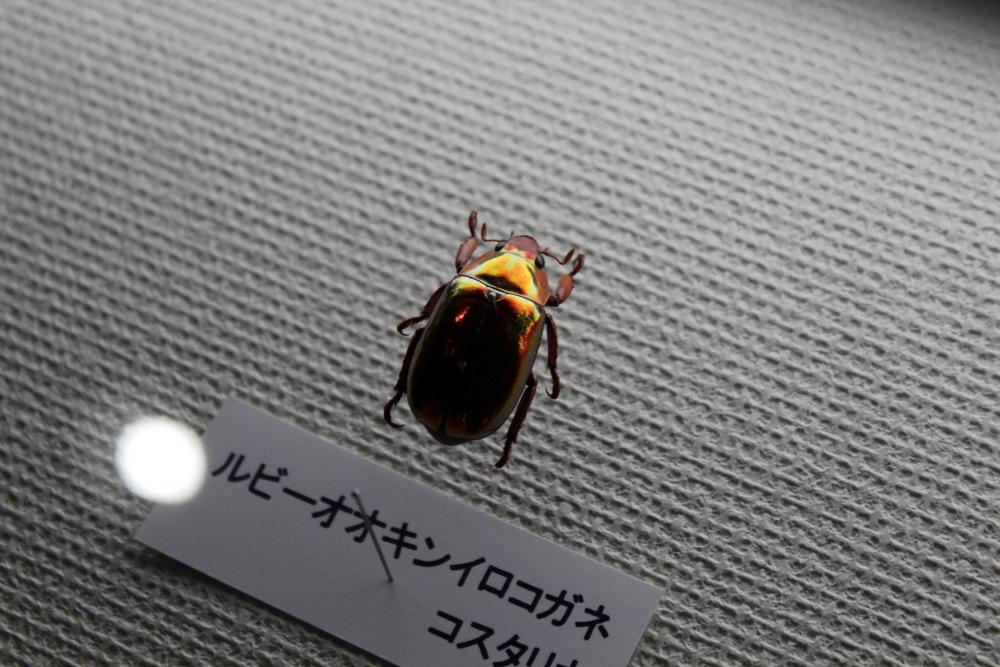 http://pangea-note.com/museum/blogimg/1-IMG_4243.JPG