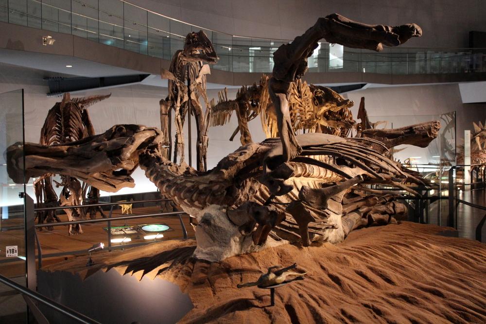 http://pangea-note.com/museum/blogimg/1-IMG_4261.JPG