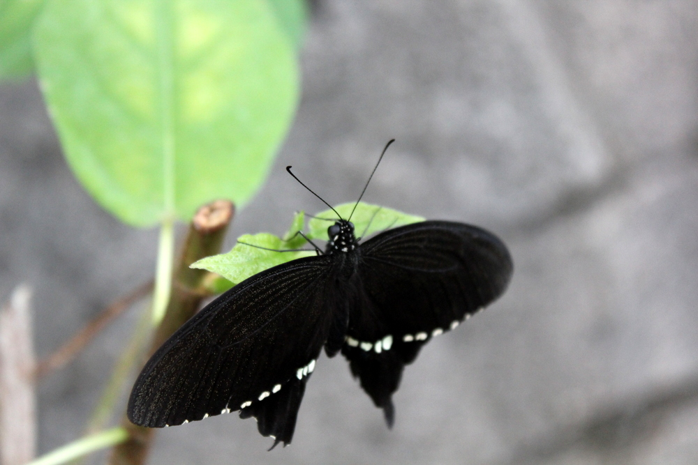 http://pangea-note.com/museum/blogimg/1-IMG_4280.JPG