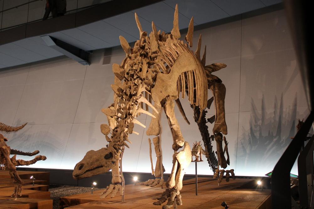 http://pangea-note.com/museum/blogimg/1-IMG_4344.JPG