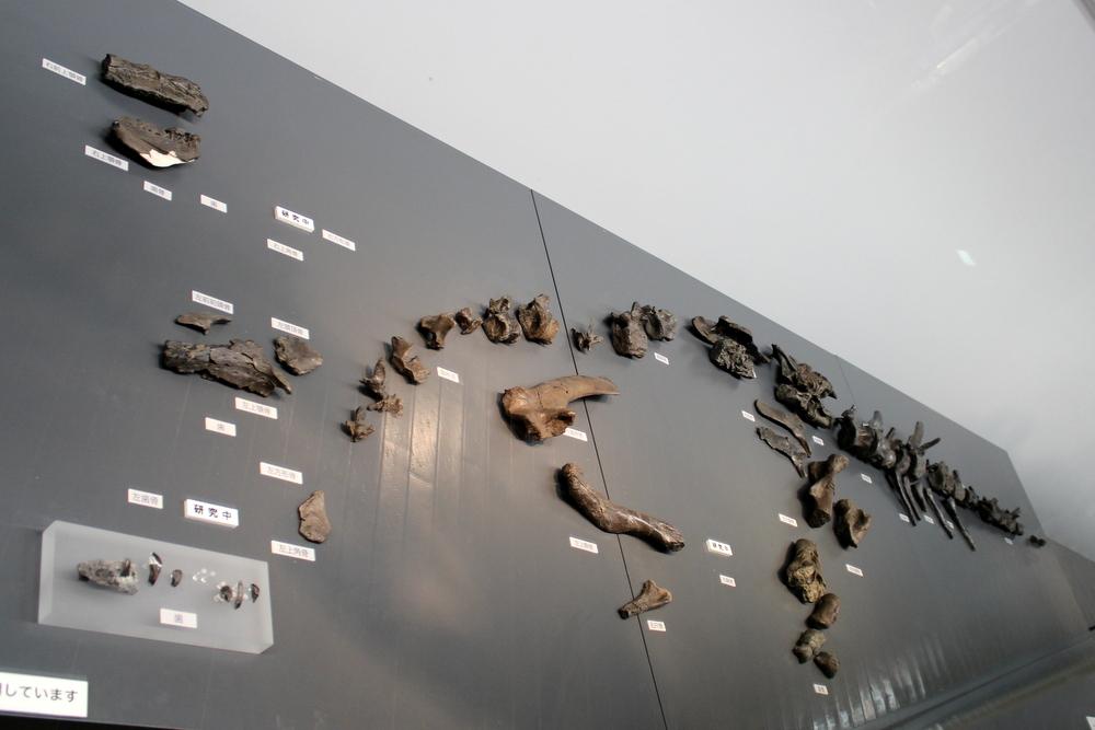 http://pangea-note.com/museum/blogimg/1-IMG_4349.JPG
