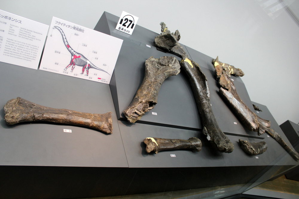 http://pangea-note.com/museum/blogimg/1-IMG_4358.JPG