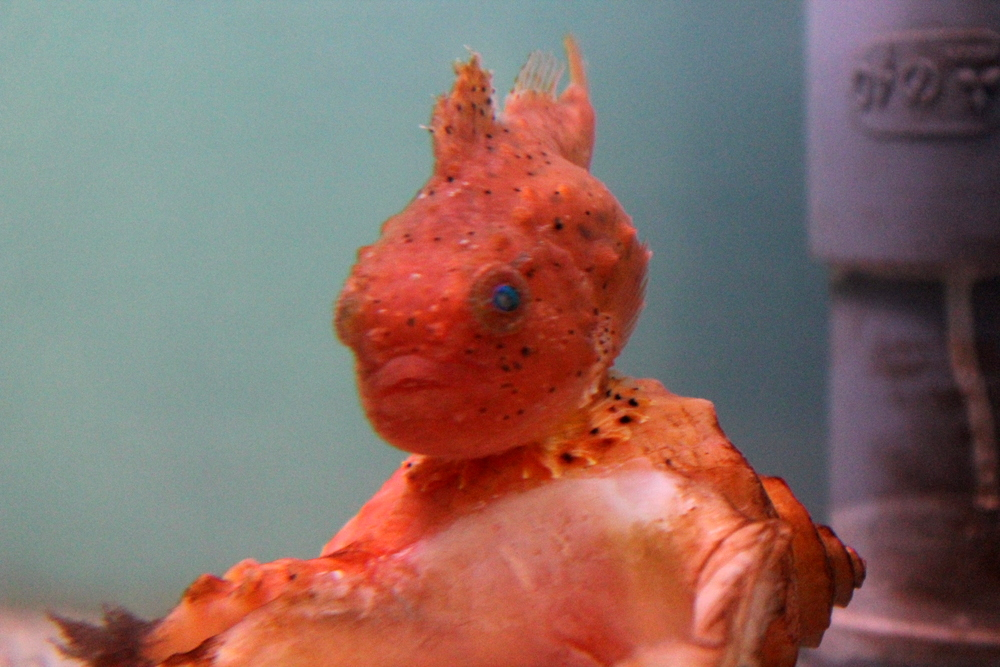 http://pangea-note.com/museum/blogimg/1-IMG_5133.JPG