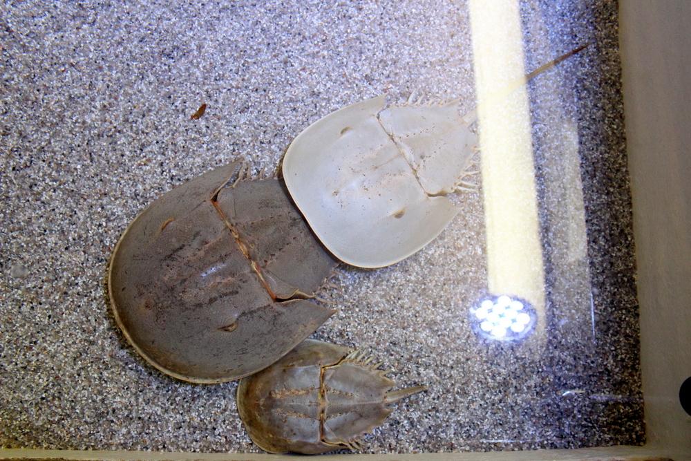http://pangea-note.com/museum/blogimg/1-IMG_5301.JPG