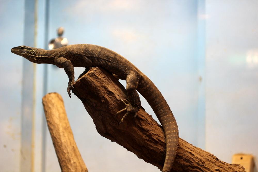 http://pangea-note.com/museum/blogimg/1-IMG_5548.JPG