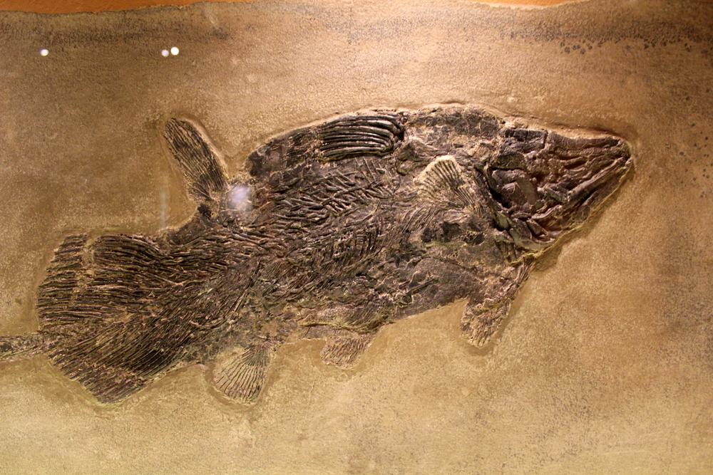 http://pangea-note.com/museum/blogimg/1-IMG_5698.JPG