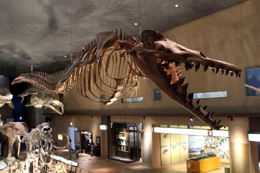 http://pangea-note.com/museum/blogimg/1-IMG_5900.JPG