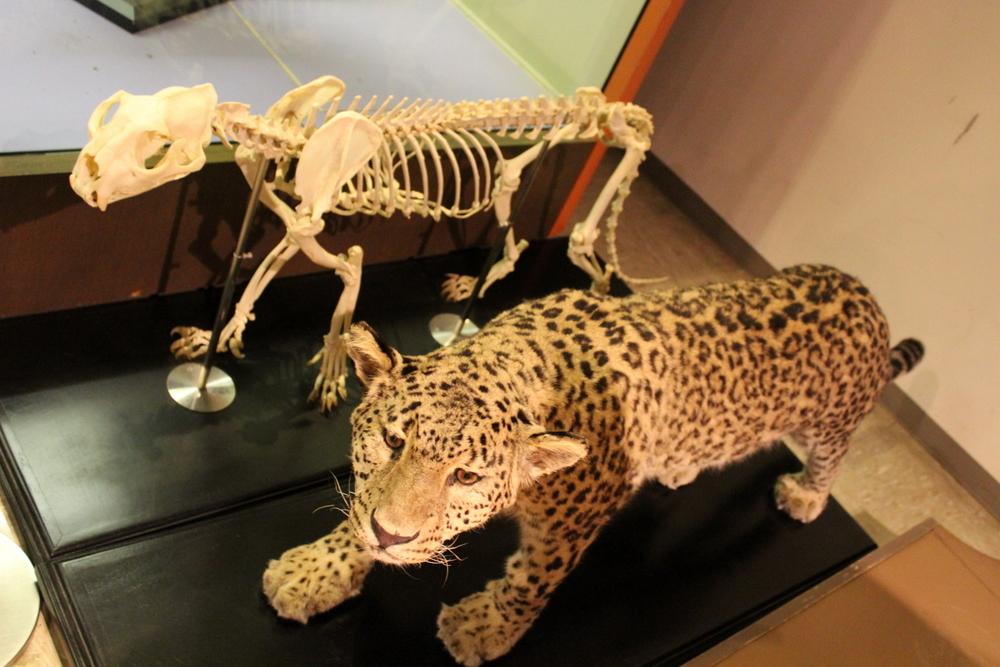http://pangea-note.com/museum/blogimg/1-IMG_6095.JPG