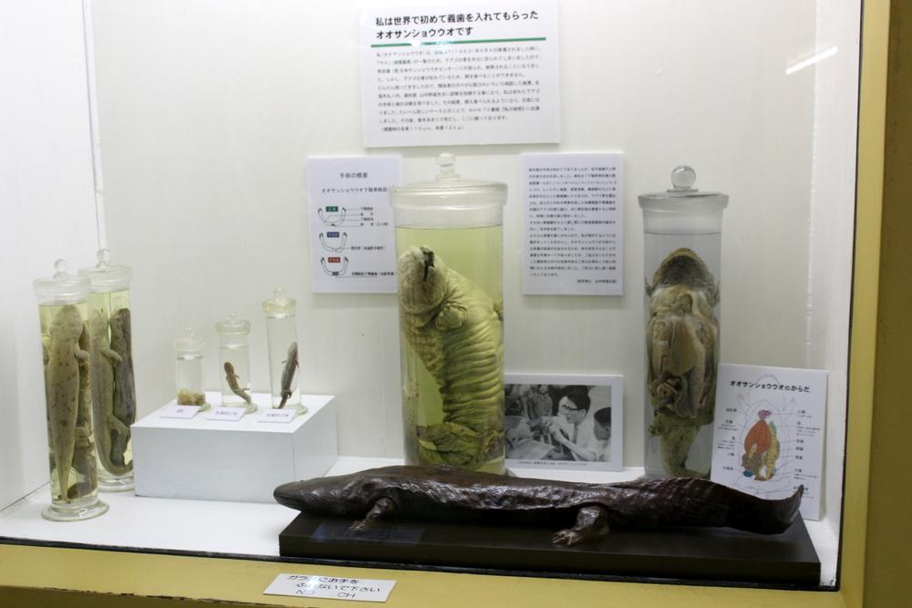 http://pangea-note.com/museum/blogimg/1-IMG_6455.JPG