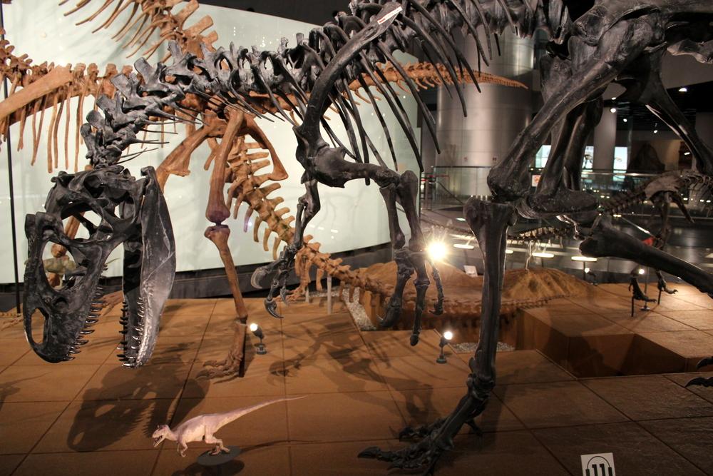 http://pangea-note.com/museum/blogimg/1-IMG_6494.JPG