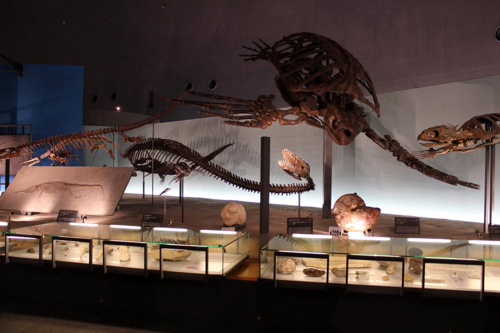 http://pangea-note.com/museum/blogimg/1-IMG_6659.JPG