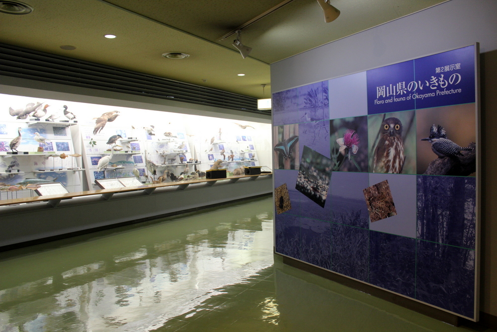 http://pangea-note.com/museum/blogimg/1-IMG_6737.JPG