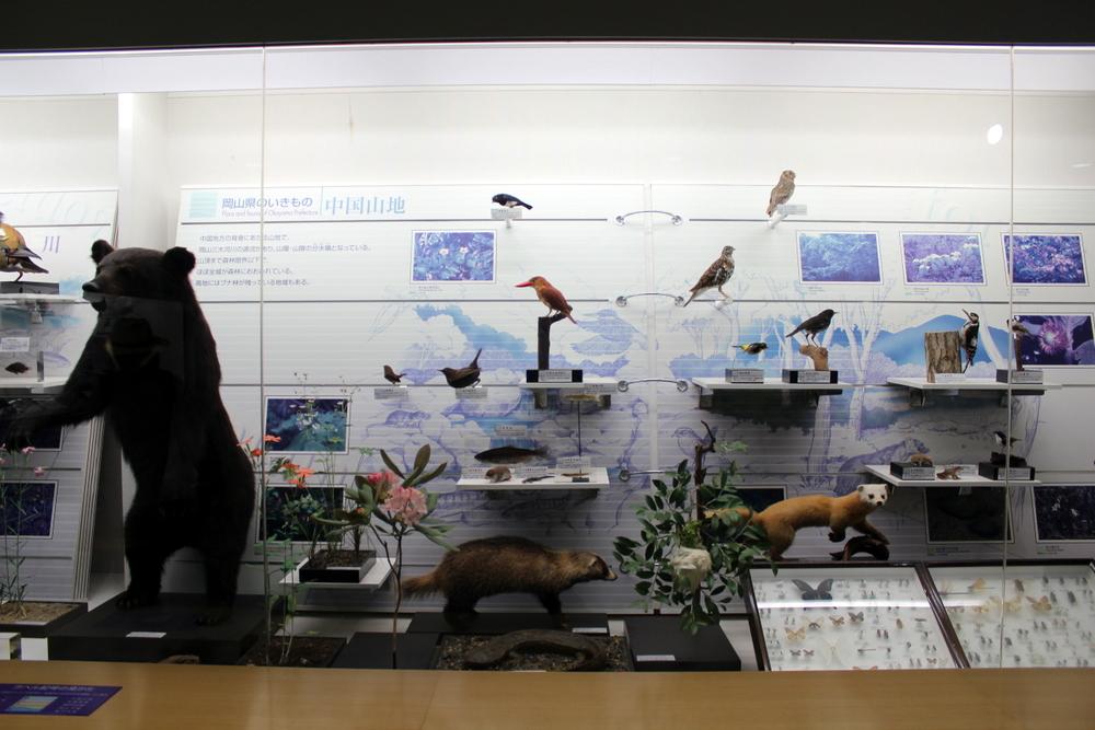 http://pangea-note.com/museum/blogimg/1-IMG_6740.JPG