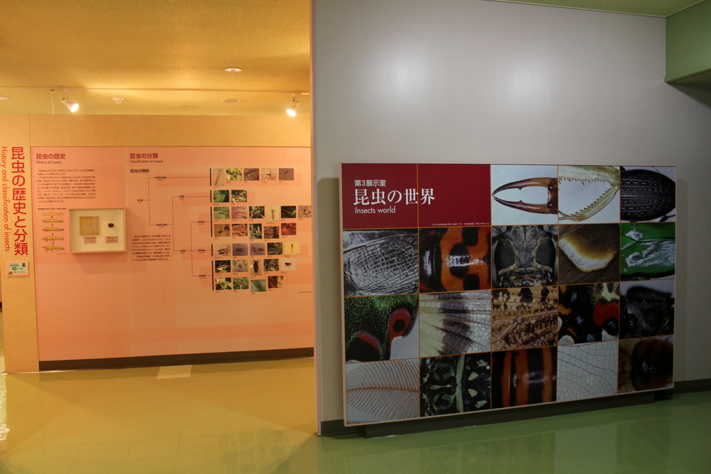 http://pangea-note.com/museum/blogimg/1-IMG_6741.JPG