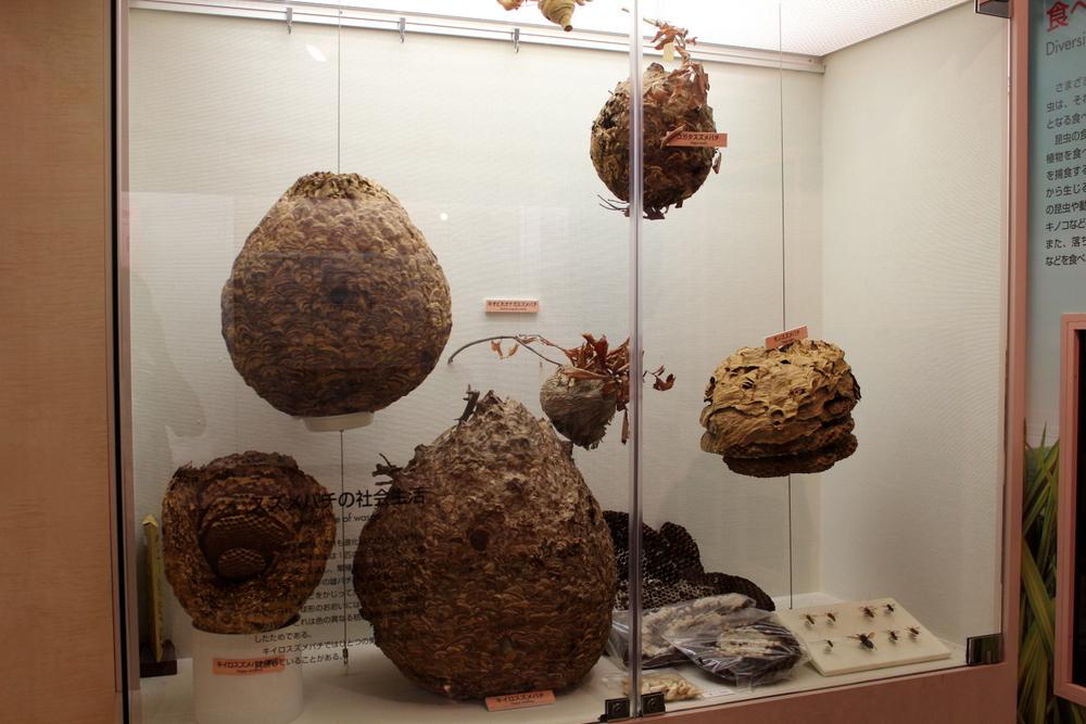 http://pangea-note.com/museum/blogimg/1-IMG_6745.JPG