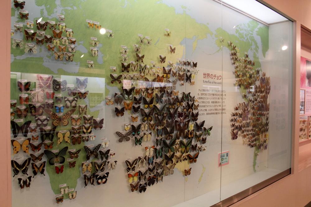 http://pangea-note.com/museum/blogimg/1-IMG_6747_1.JPG