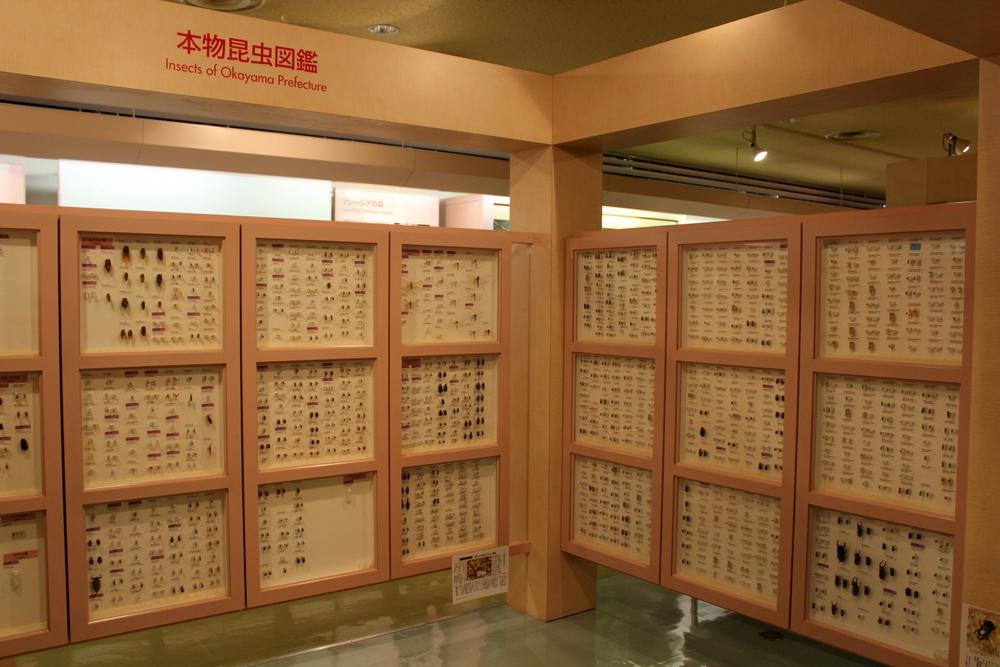 http://pangea-note.com/museum/blogimg/1-IMG_6748_1.JPG