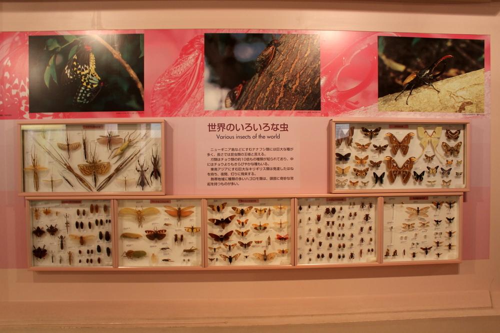 http://pangea-note.com/museum/blogimg/1-IMG_6749_1.JPG