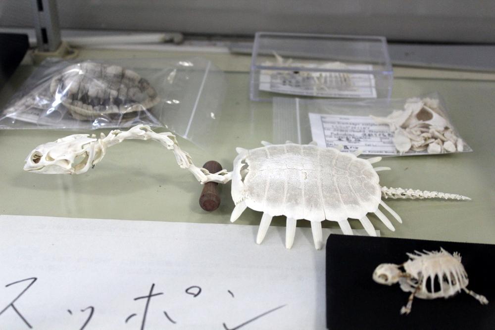 http://pangea-note.com/museum/blogimg/1-IMG_6754.JPG