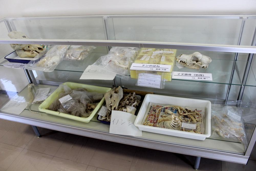 http://pangea-note.com/museum/blogimg/1-IMG_6757.JPG