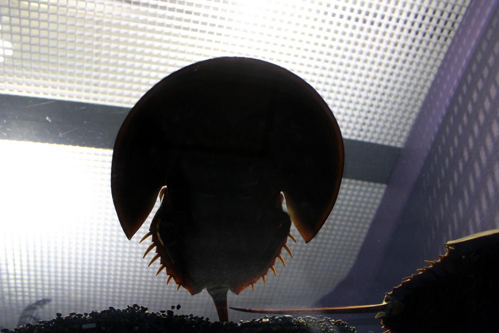 http://pangea-note.com/museum/blogimg/1-IMG_6972.JPG