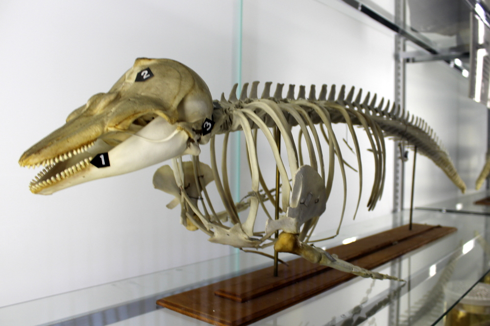 http://pangea-note.com/museum/blogimg/1-IMG_6980.JPG