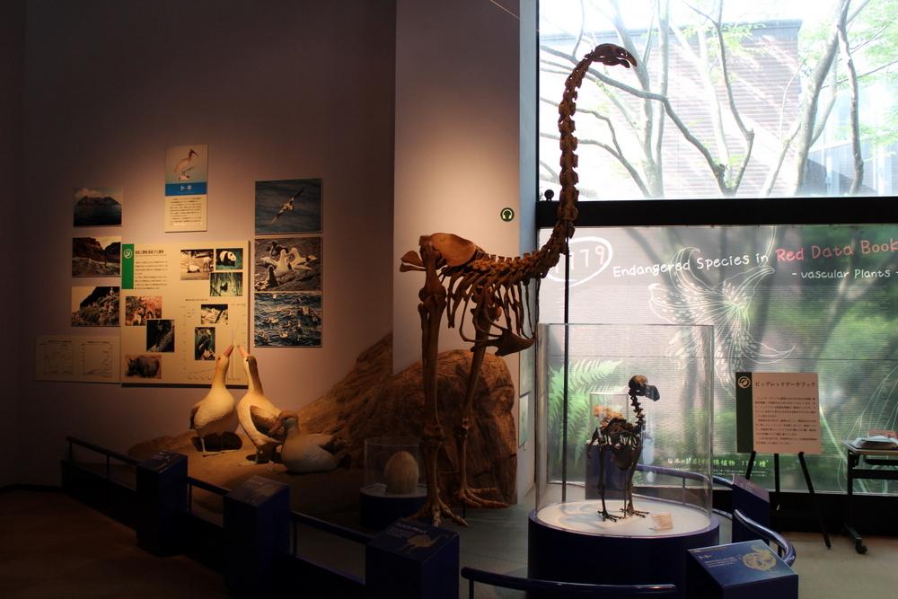 http://pangea-note.com/museum/blogimg/1-IMG_7336.JPG