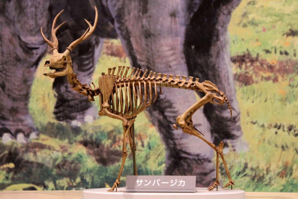 http://pangea-note.com/museum/blogimg/1-IMG_7592.JPG