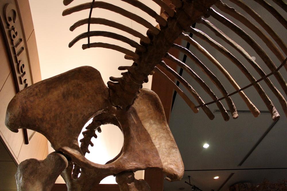 http://pangea-note.com/museum/blogimg/1-IMG_7596.JPG