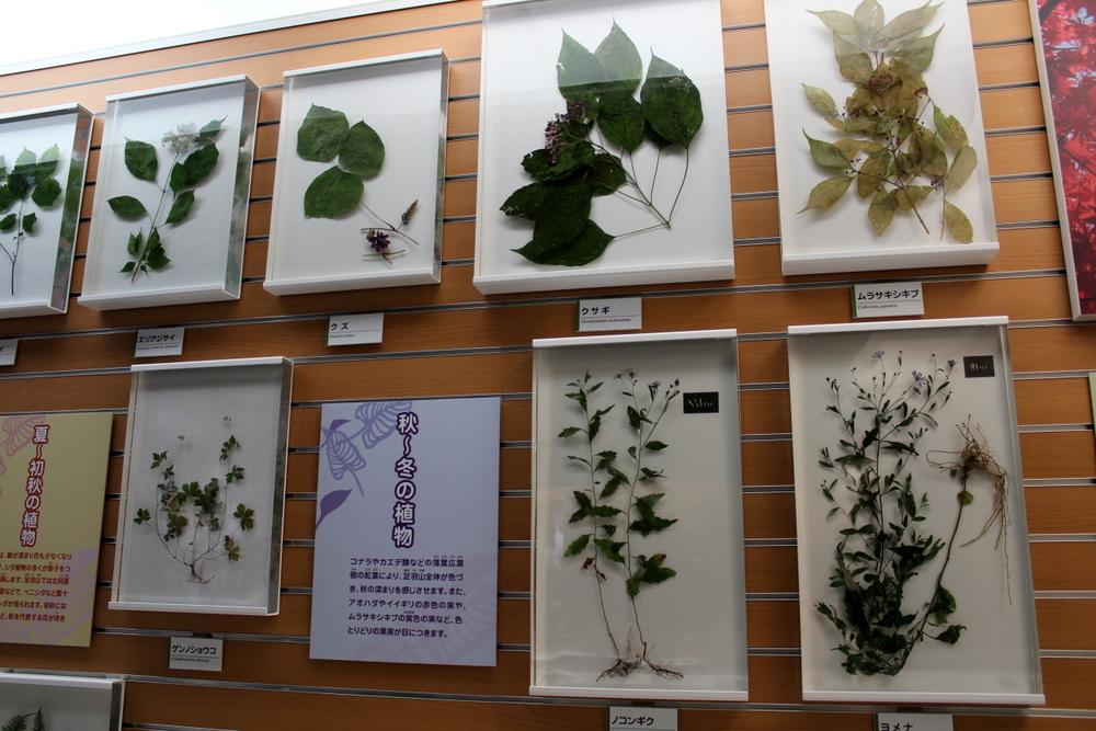 http://pangea-note.com/museum/blogimg/1-IMG_7802.JPG