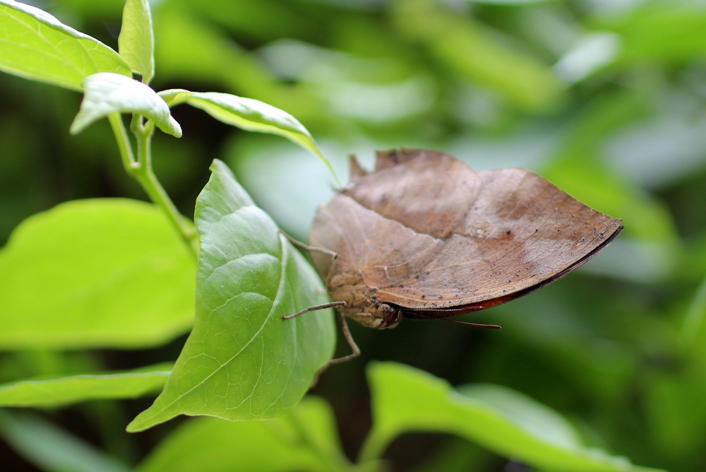 http://pangea-note.com/museum/blogimg/1-IMG_7951.JPG