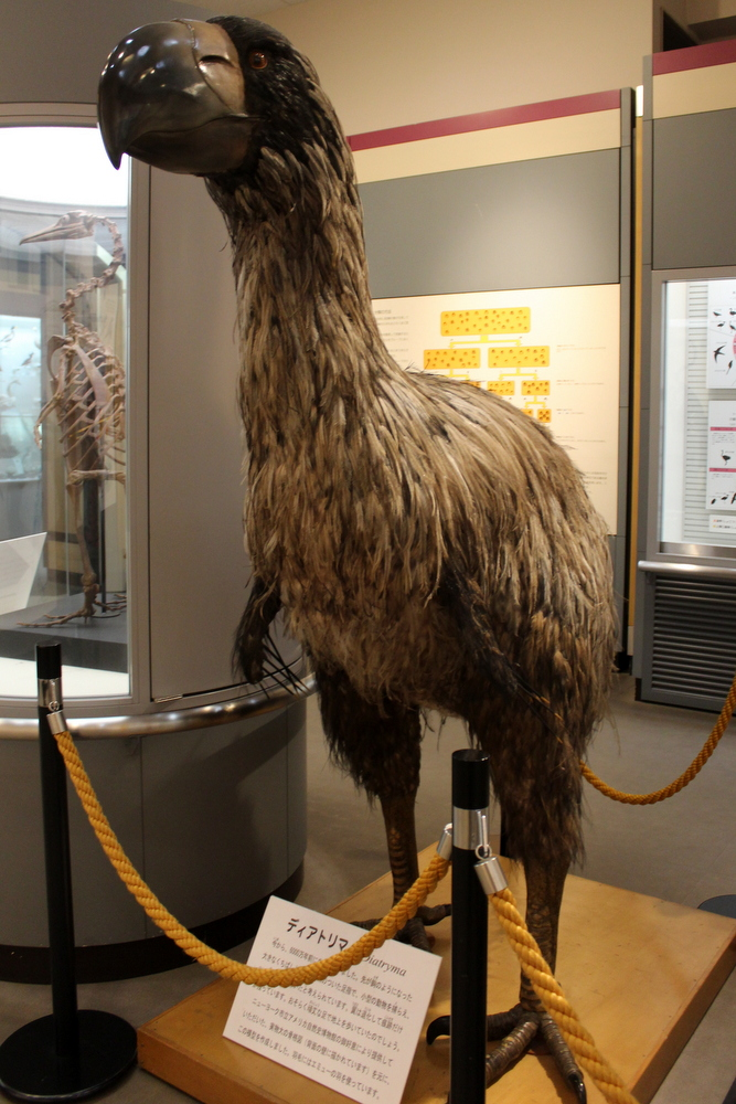 http://pangea-note.com/museum/blogimg/1-IMG_8694.JPG