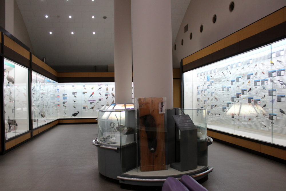 http://pangea-note.com/museum/blogimg/1-IMG_8705.JPG