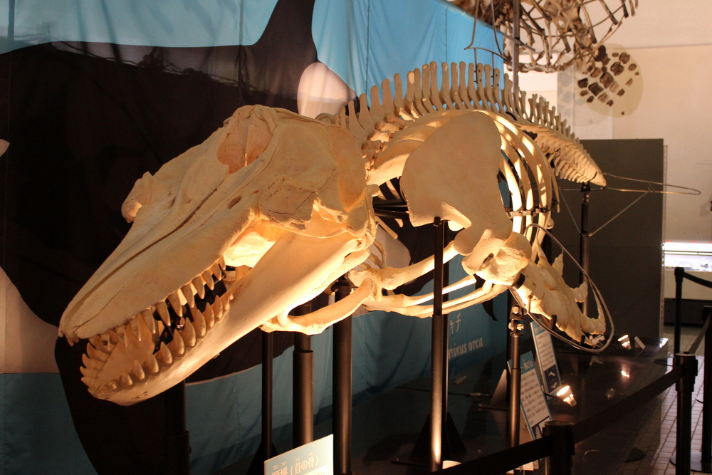 http://pangea-note.com/museum/blogimg/1-IMG_9100.JPG