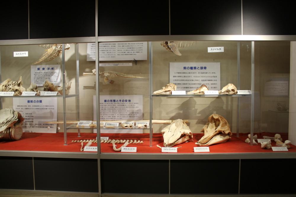 http://pangea-note.com/museum/blogimg/1-IMG_9130.JPG